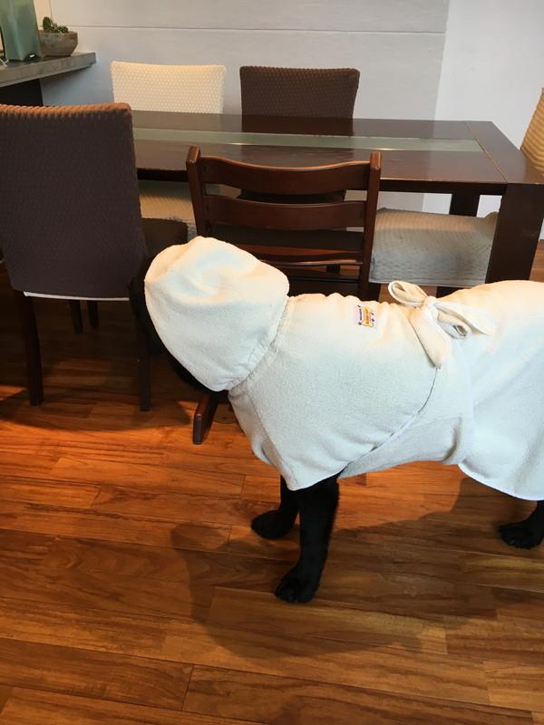犬と暮らす家-グルーミングルーム0102