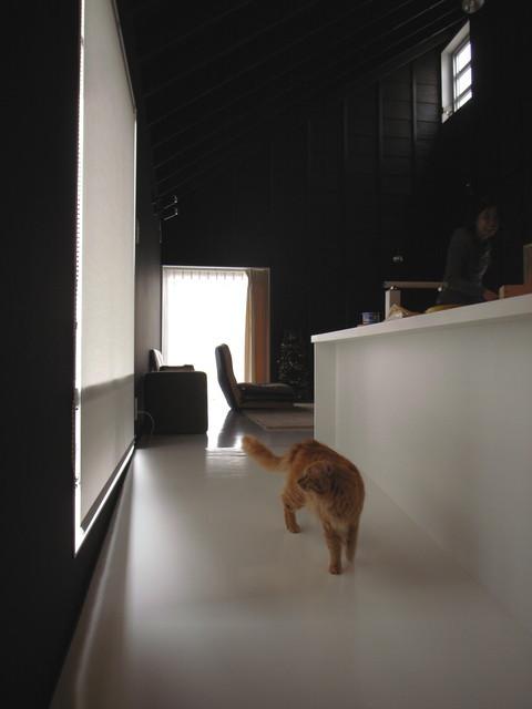 キッチン前は猫の小路