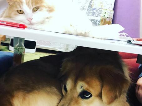 犬猫共生住宅