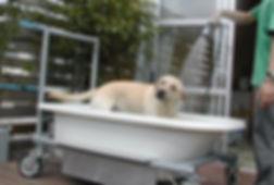犬と暮らす家-デッキテラス0103