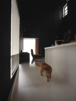 猫ハウス-arfler0101