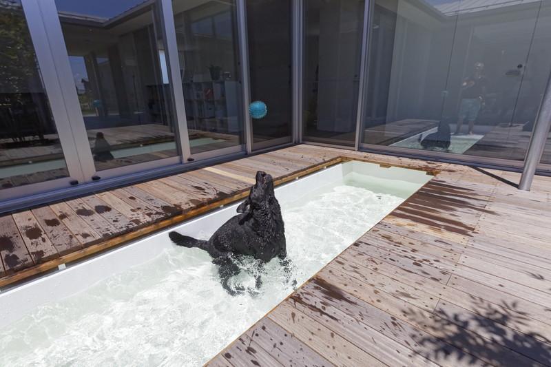 犬と暮らす家-プール0106