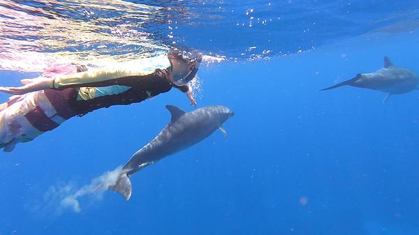 dauphins tim.png