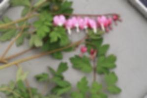 технология отпечатков растений.jpg