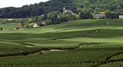 champagne-vigneti-coteaux-1-550x298.jpg