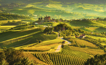 Vineyards-around-the-Castle-Ginzane-Cavo