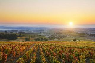 burgundy-beaujolais-landscapes-secret-wi