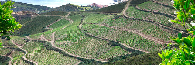 did-you-know_wine_languedoc-roussillon_0