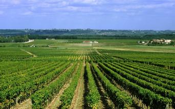 bordeaux_vineyards_1.jpg