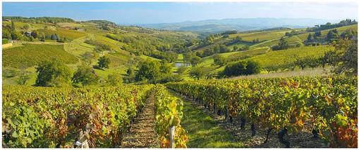 Beaujolais-vineyards-002.jpg