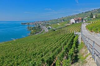 geneva-vineyard-pixabay.jpg