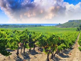 Languedoc-Wine-Languedoc-Roussillon-418x