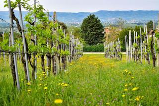Tili-Vini-vineyards-1024x683.jpg
