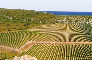 Languedoc-vineyards-sponsored.jpg