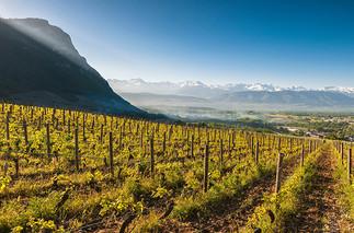 savoie-wine.jpg