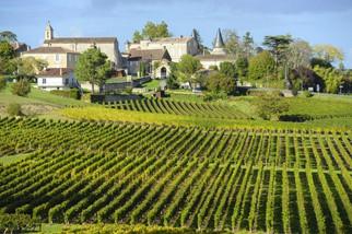 vineyard-saint-emilion-bordeaux-and-the-