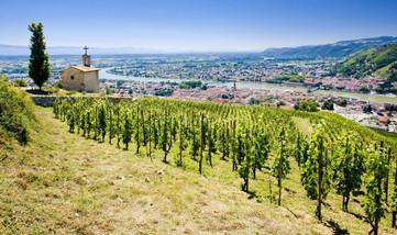 hermitage-vineyard-rhone_wclqbs.jpg