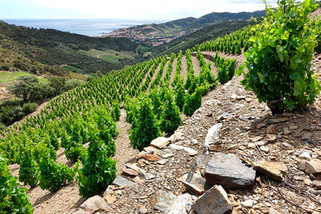 did-you-know_wine_languedoc-roussillon.j
