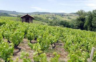wine-weekend-saint-amour.jpg