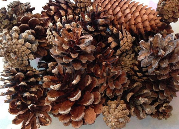 Regular Sized Pinecones (Quantity of 5)