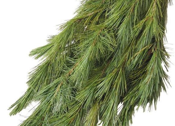 Princess Pine Boughs Bundle