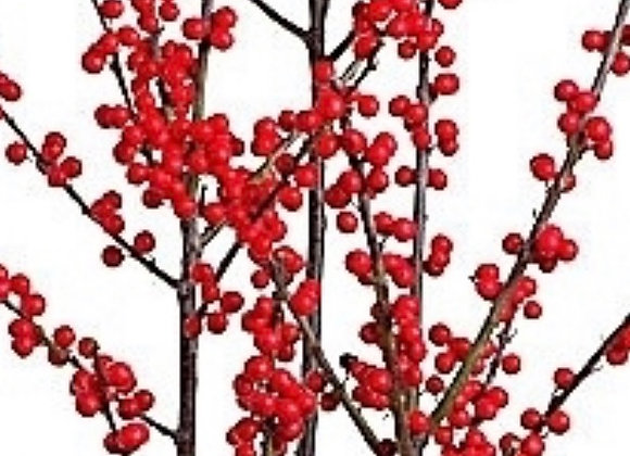 Red Ilex Berries Bunch