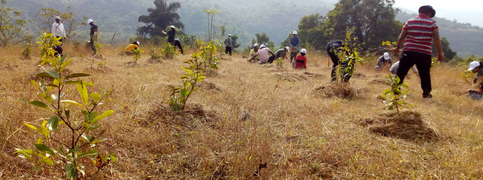 KPIT Volunteers Participited in Plantation Activity