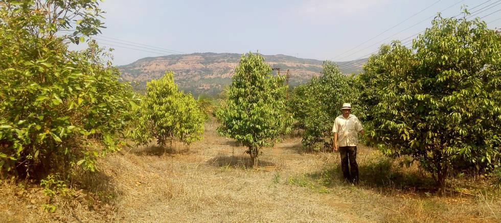 5 years ld Plantation Site Devghar