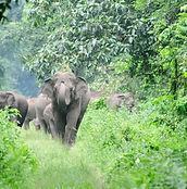 elephant-2042182_1280.jpg
