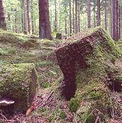 forest-941826_960_720.jpg
