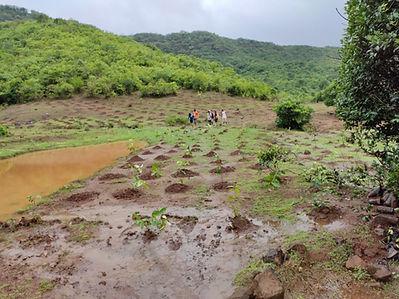 Tree plantation view 1.jpg
