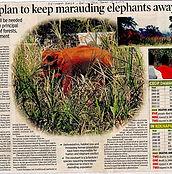 2011-11-25 Elephant article _TOI_edited.