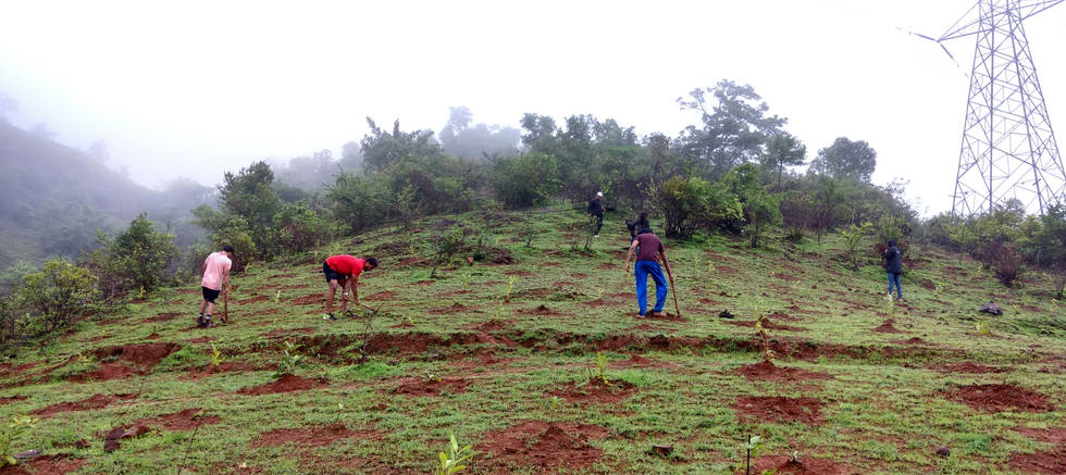 Tree Plantation 2016