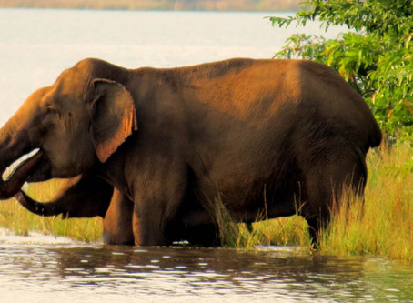 ART OF LIVING with the ELEPHANTS By Prachi Mehta