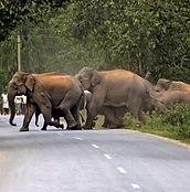 674404-elephant-rna.jpg