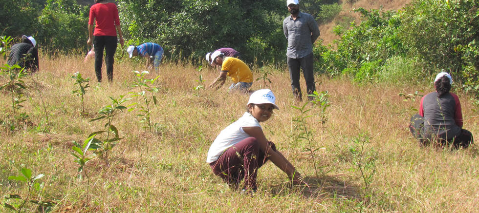 Plantation Maintenance