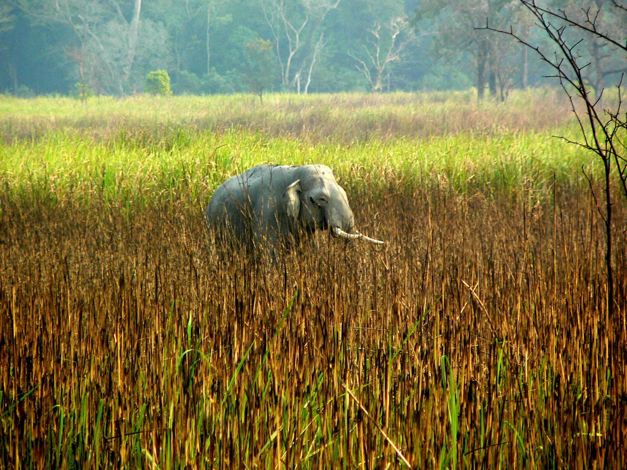 Human elephant interaction