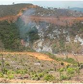 Burning for Rubber Plantation.jpg