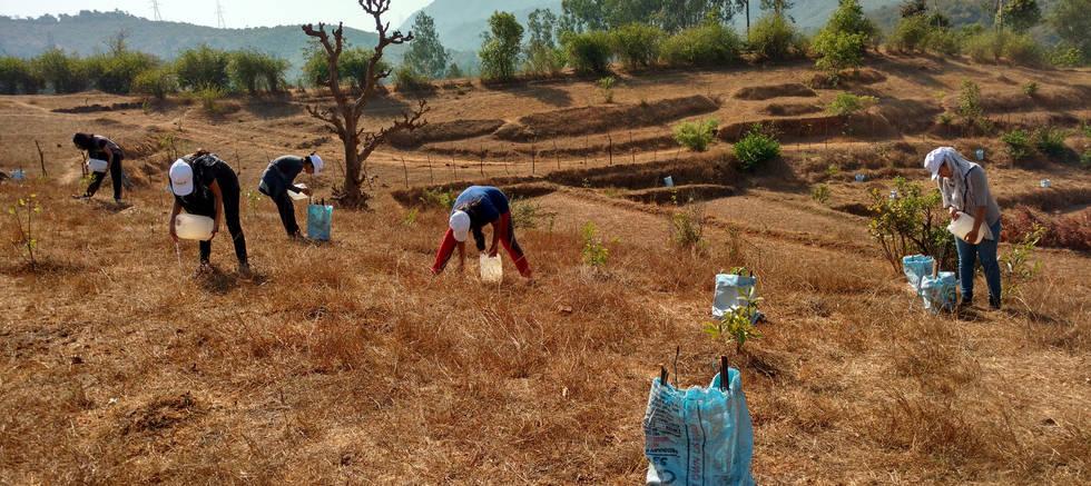 Volunteers Watering plants