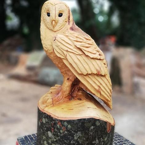 Owls & Other Birds