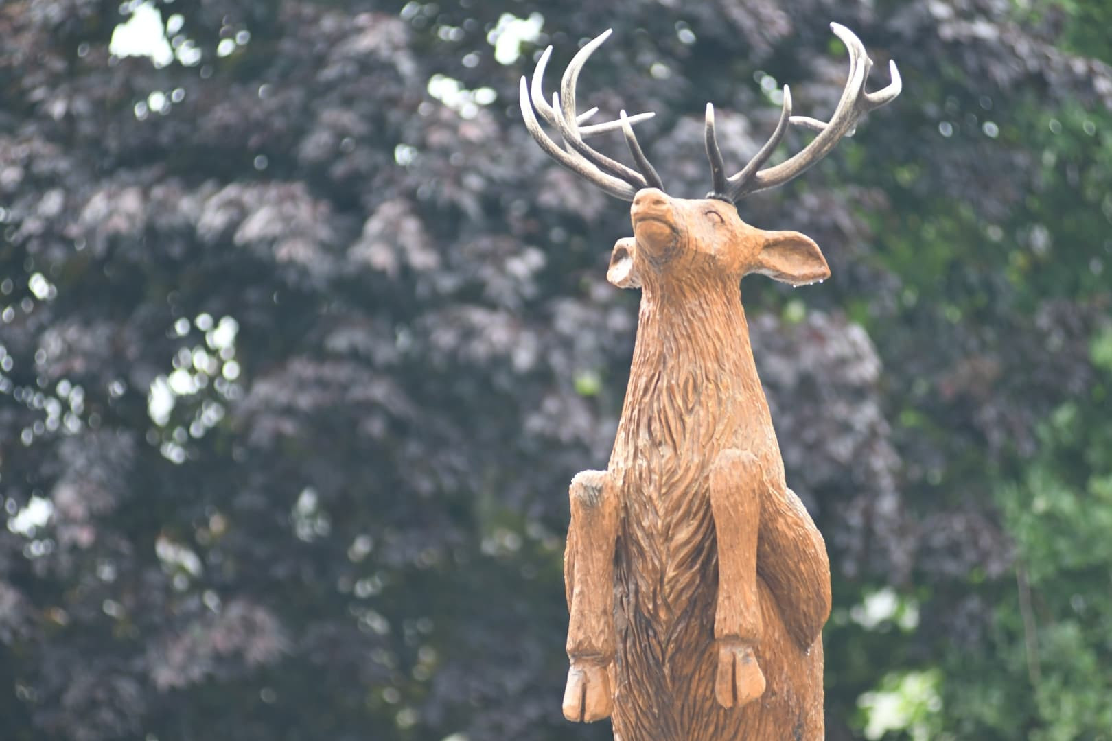 Killarney Life-Sized Red Deer Stag