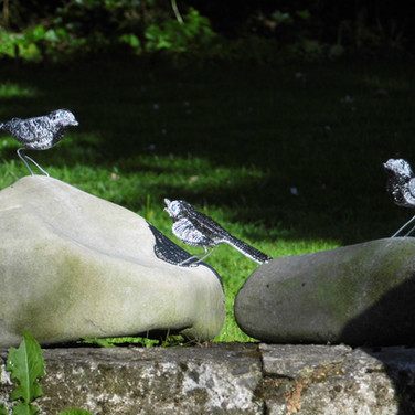 Wagtail Family