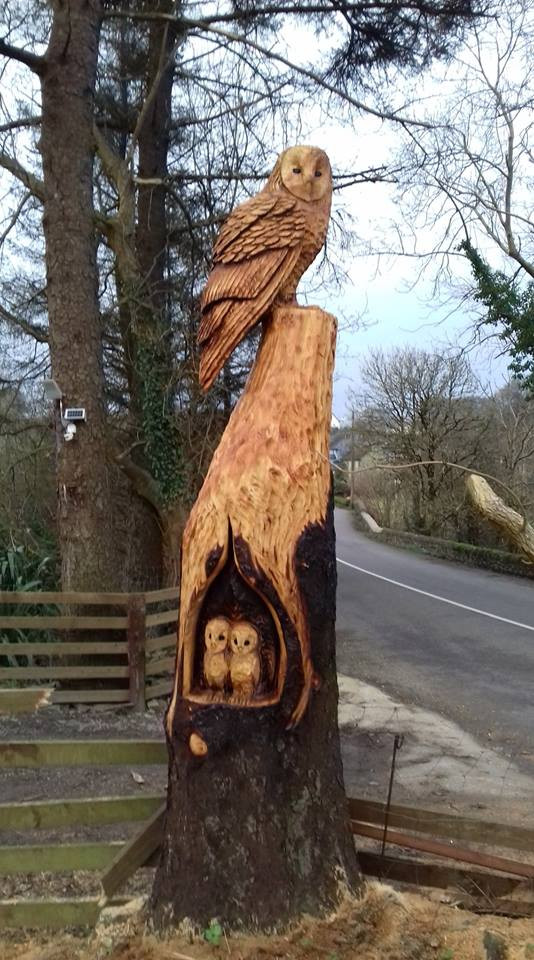 Large owl with 2 baby owls in Clonakilty, Co Cork