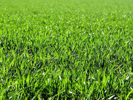 Miten vermikompostiuute suojaa kasveja taudeilta ja ympäristön aiheuttamalta stressiltä?