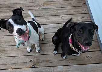 3DogLazyDay Pet Sitting | Cora and Della