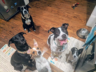 Cora, Penny, Della, Boomer, and Kady waiting on a treat.