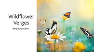 Capture Wildflower.JPG