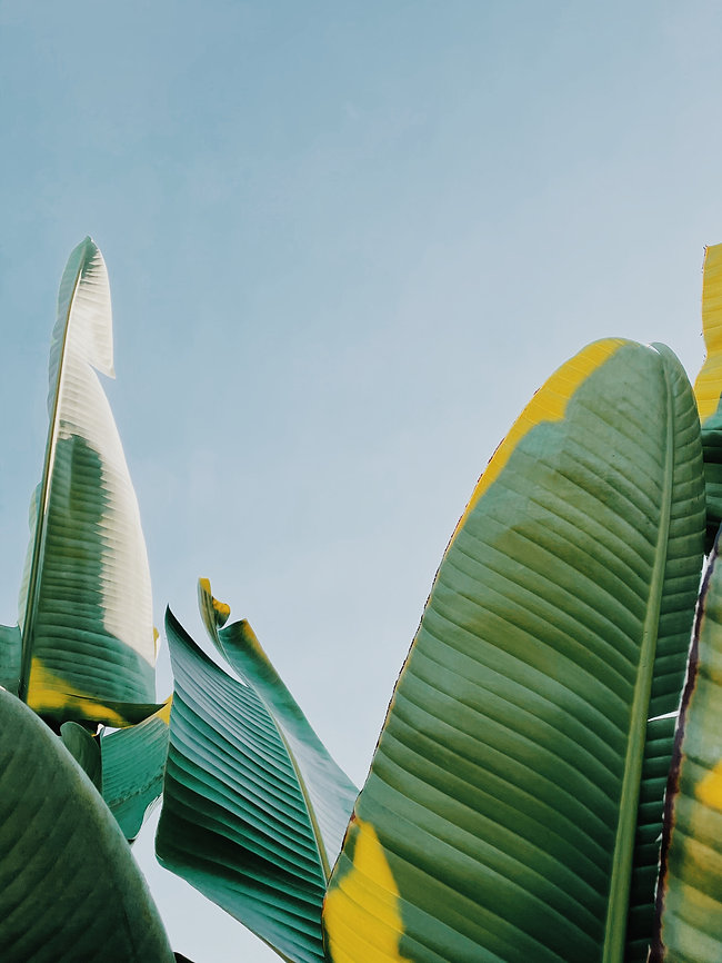 durian-bullet-QxJse7_J3L8-unsplash.jpg