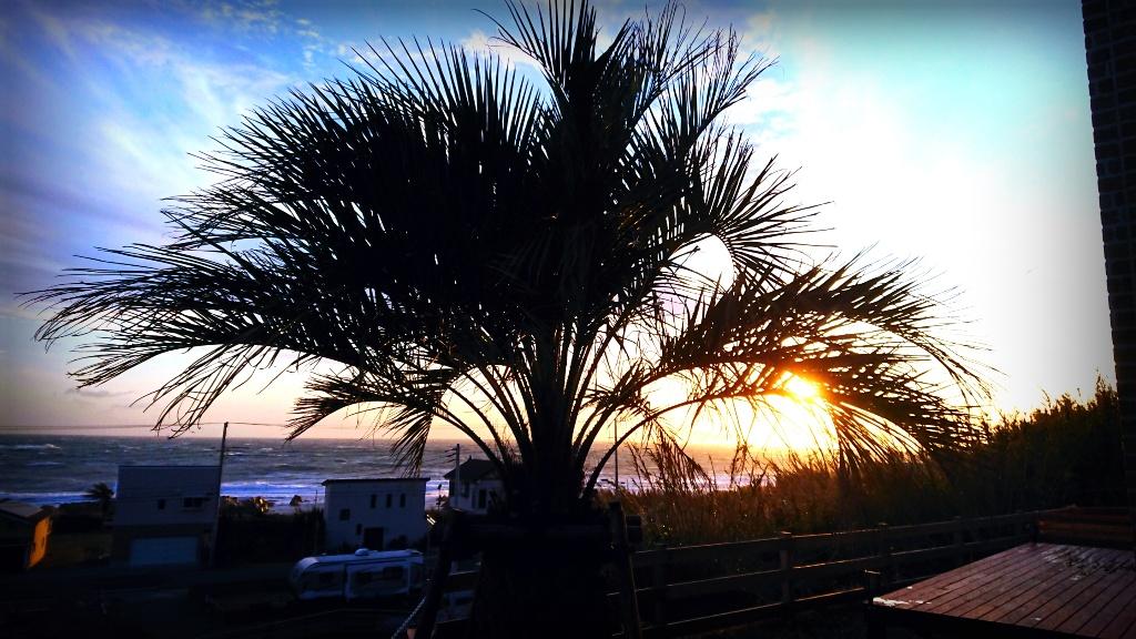 夕日 やしの木 眺め ロッジ