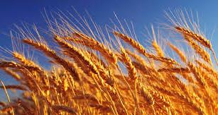 Minha nova vida sem trigo!
